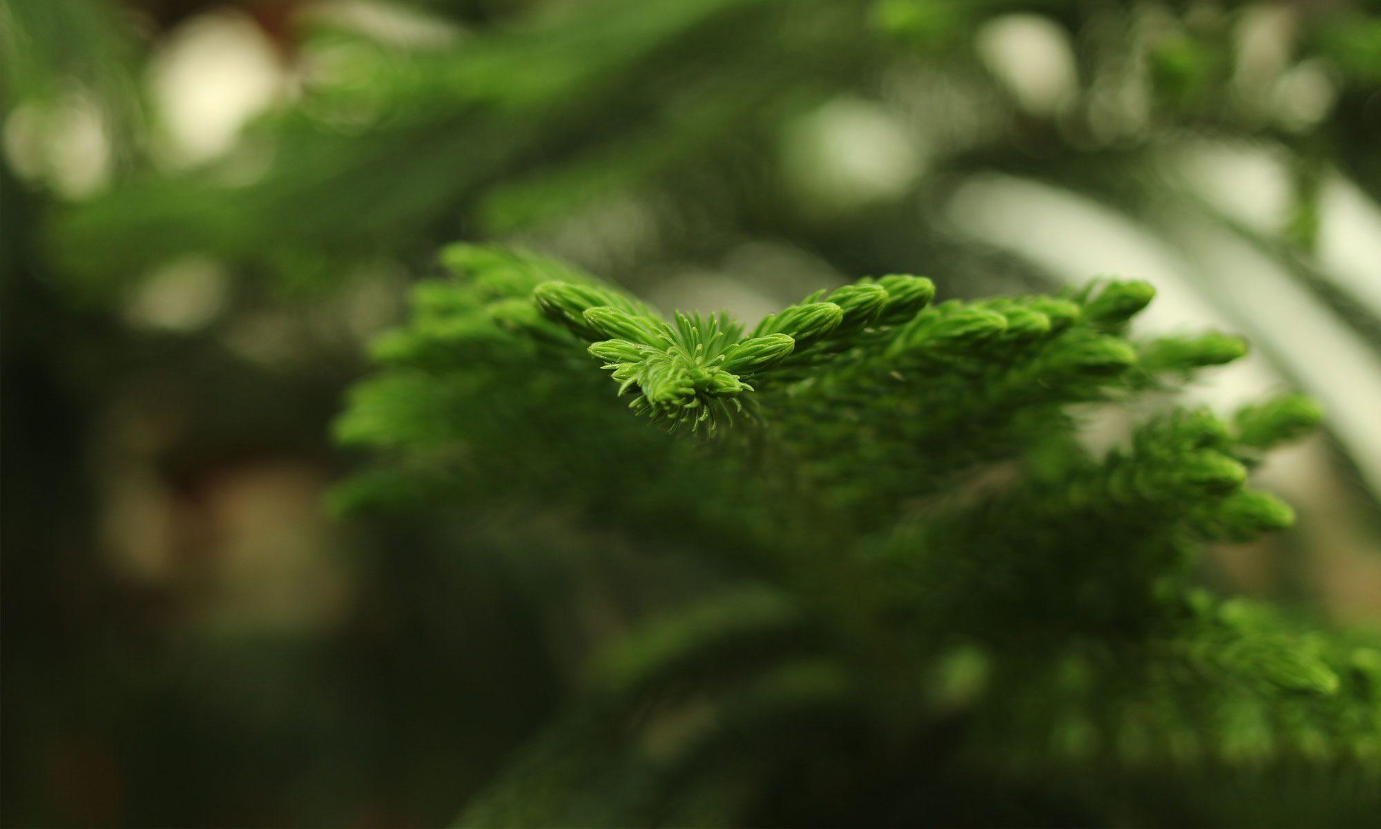 Environmental Biocatalytics